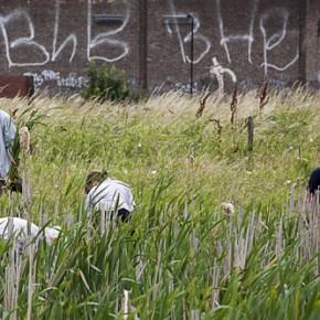 Volunteers Clearing Reed - Walthamstow Marshes