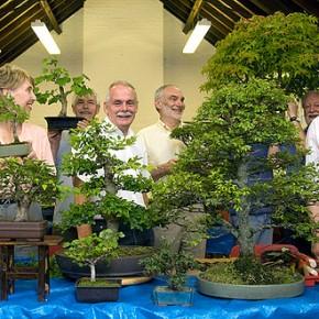 Walthamstow Bonsai Group